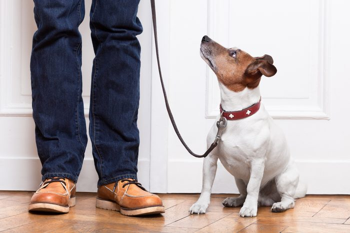 Creating a Home Sweet Home for Your New Dog