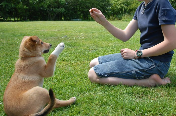 Guidelines to Keep Your Dog Away From Stress