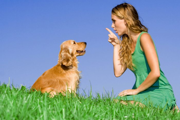 Extending Your Dog's Life